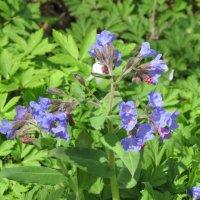 Цветы весны :: Ольга Иргит