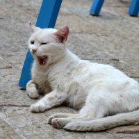 Ленивая которская кошка :) :: Екатеринa Шалаева