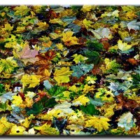 Осенняя палитра :: Сергей Басов