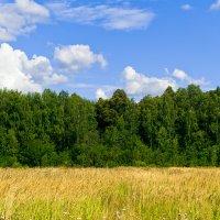 небо, лес, трава :: Дмитрий Соловьев