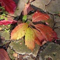 осень ,осень, ну давай у листьев спросим... :: Лана Lana