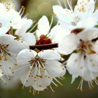 Весна :: Ирина Черепанова