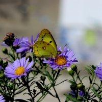 Бабочка2 :: Мадина Девеева