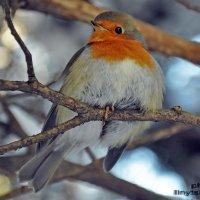 Wonderful Robin :: Roman Ilnytskyi