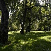 Яблоневый сад :: Лена Лена