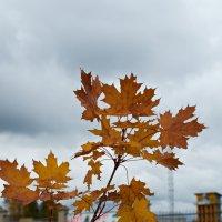 осень в городе :: Натали Зимина