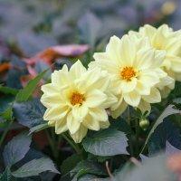 Про цветы :: Наталия Крыжановская