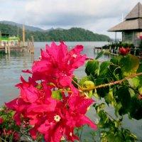 Море с цветами :: Наталья Нарсеева