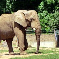 Зоопарк Ниредьхаза :: Таня O