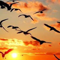 чайки жииииирные летали :: Наталья