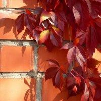 от осени не спрятаться, не скрыться :: Лана Lana