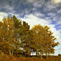 Осень :: Алла Шулепина
