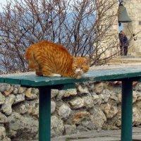 Кошки Херсонеса. Ты сними,сними меня,фотограф... :: Дядюшка Джо