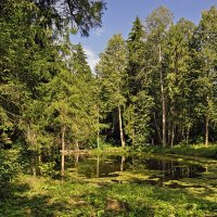 Лесной пруд :: Надежда Лаптева