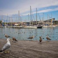 очень крупные чайки (?) на набережной Барселоны :: Victoria M.