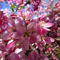 Весна :: Slava Kappa