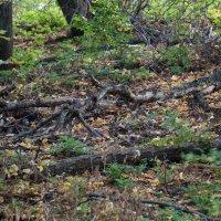 лес. :: Женька Кузяев