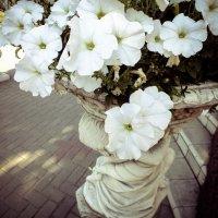 Городские цветы :: Дарья Ашарина