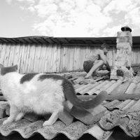 Мужчина и кот на крыше :: Екатерина Богомолова