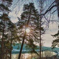 Лесное солнце :: Сергей Дубинин