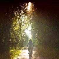 Солнечная дорожка :: Денис Вахрушев