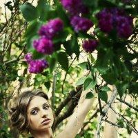 Lilac :: михаил шестаков