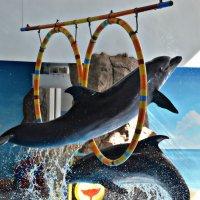 Парящий дельфин :: Олеся