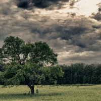 Одинокое :: Марк Поликашин