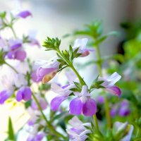 Зимние цветы :: Boris Khershberg