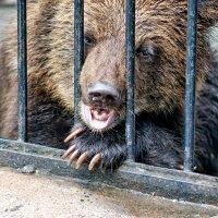 Новосибирский зоопарк :: Наталия M