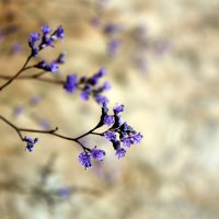 Цветы на камне :: Елена Сухенко