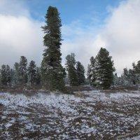 Первый снег :: Ольга Иргит
