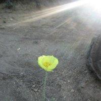луч солнца золотого :: Natali Kosheleva