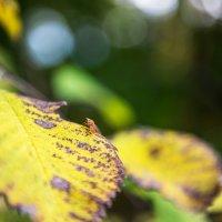 муха в осеннем лесу :: Натали Виноградова