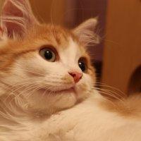 мой кот Сем :: Анастасия Позднякова