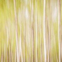 Весенний лес :: Юлия Куликовская