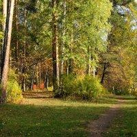 Осенние тропы. :: Валерия Калашникова