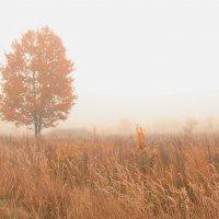 утро туманное... :: Павел Богданов