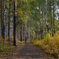 Осень в парке... :: Валерия Калашникова