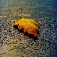 Осенний лист... :: Роман *******