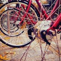 Осенний прикол... :: SergioSt