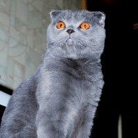 Любопытный кот)) :: Катерина Аксенова