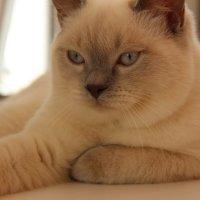 мой котик))) :: снежана крамер