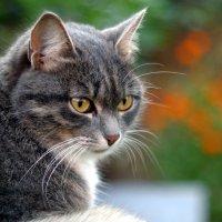 Кошка :: Андрей Замышляев