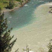 Слияние двух рек!  Горный Алтай. :: сергей Золотухин