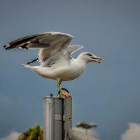 чайка :: Victoria M.