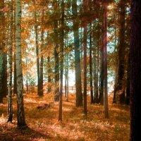 лучи солнца :: Юлия Смоляк