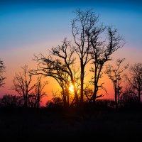 Африканский закат. Дельта реки Окаванго. Ботсвана :: Андрей Ольшангер