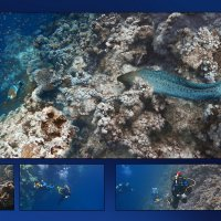 Blue Hole :: Константин Рамзес