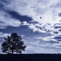 Ты не вейся черный ворон... :: Ренат Менаждинов